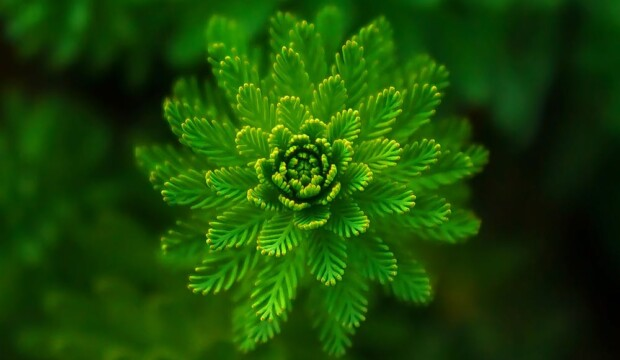 The effect of color on the human psyche -green