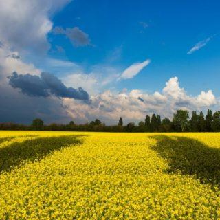 Топ 30 крупнейших компаний Украины